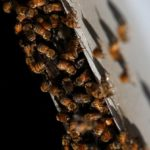 CATCH THE BUZZ – 1,000 Acres Of  Iowa Land  Donated For Honey Bee Forage